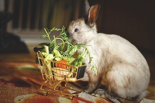 Comment bien nourrir votre lapin à la maison?